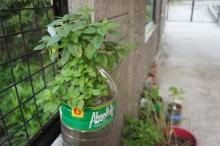 VermiChar Eco-fertilizers Subsistence Gard